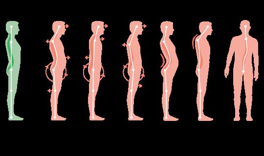 Kroppens olika hållningar
